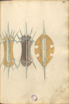MS B.26 049r.png