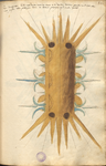 MS B.26 084r.png